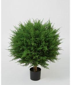 Cypressball med ekte stamme