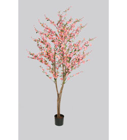 Kirsebærtre 150 og180 cm