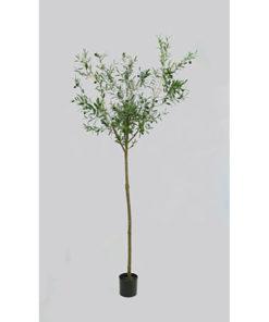 Oliventre med tynn stamme
