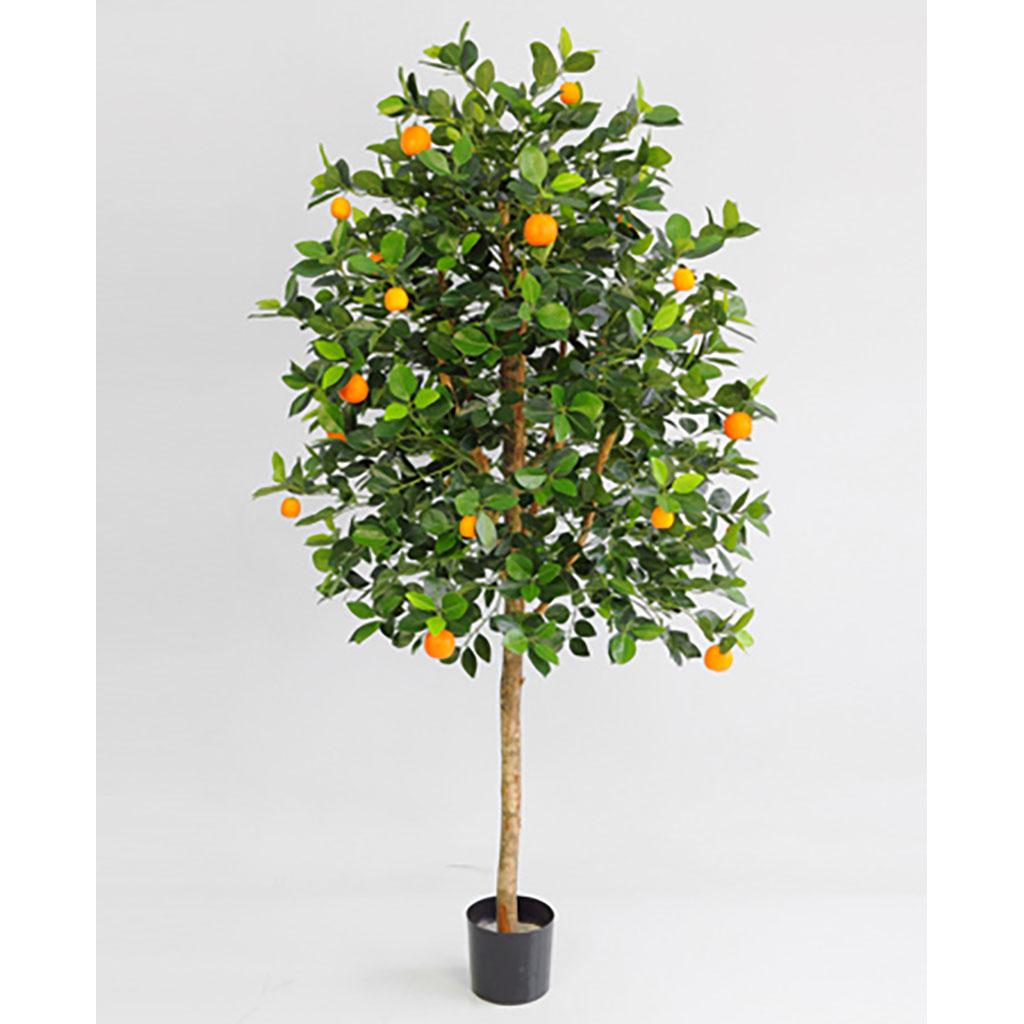 Appelsintre
