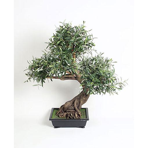 Oliven - Bonzai i krukke