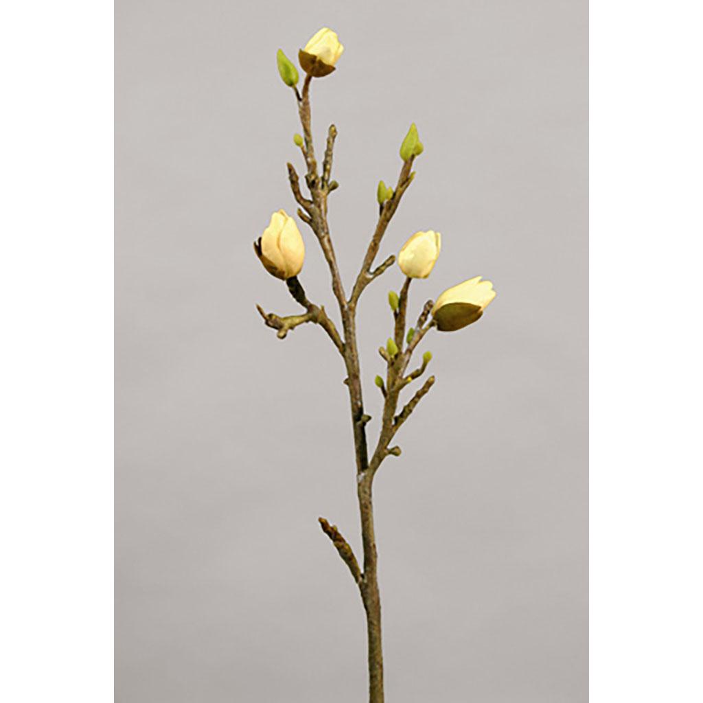 Magnoliakvist 68 cm