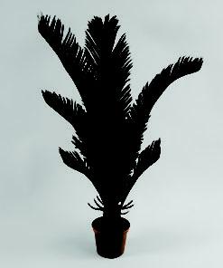 Cycas Palme 60 cm
