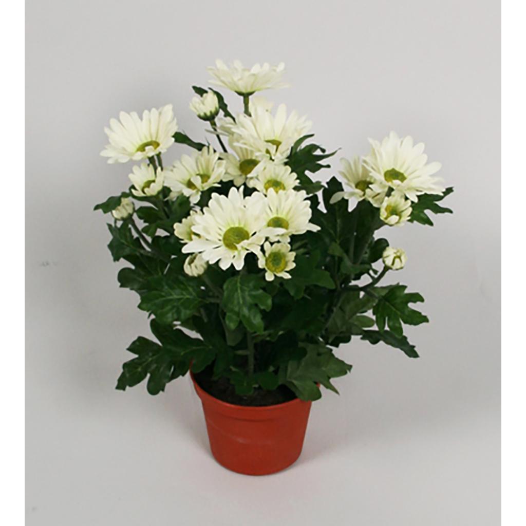 Chrysantemum 25 cm