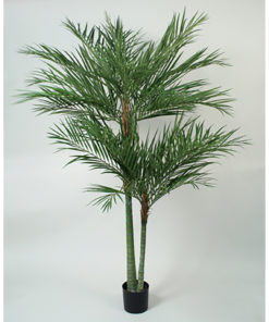 Areca flerstammet palme