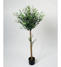 Eucalyptus mini