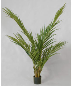 Majesty Palm 150 cm
