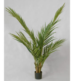 Majesty Palm 150 cm