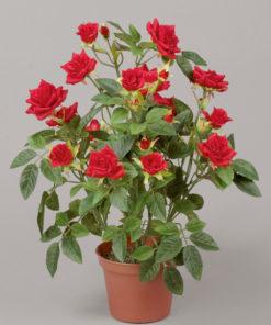 Roseplante i potte 33 cm