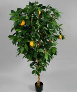 Appelsintre 170 cm