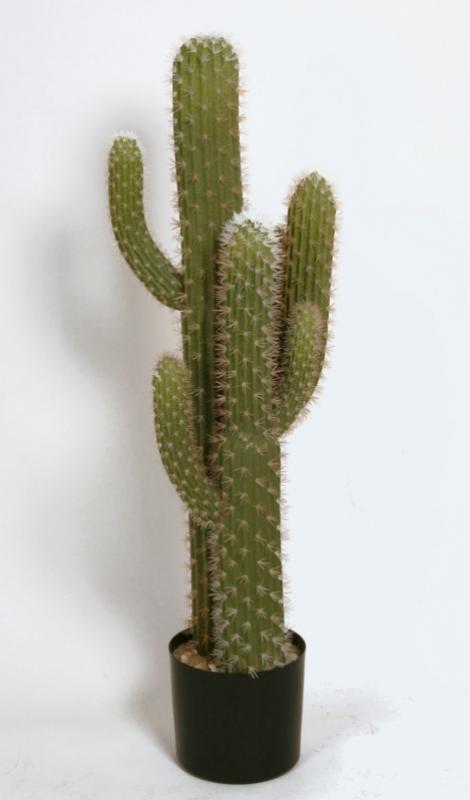 Kaktus 109 cm