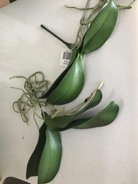 Orchideblad