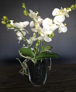 Orchide kvist