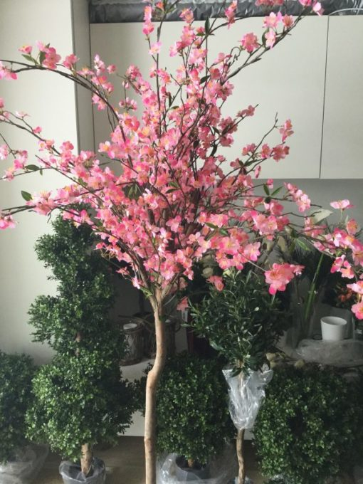 Cherry blossom kirsebærtre