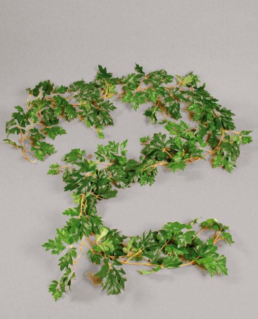 Cissus girlander 270 cm