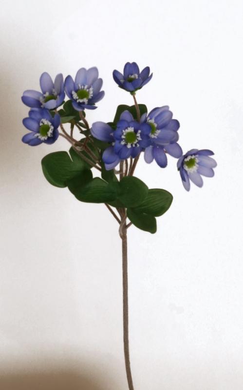 Blåveis 43 cm