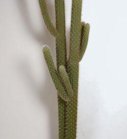 Cactus 216 cm
