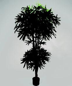 Aralia 170 cm