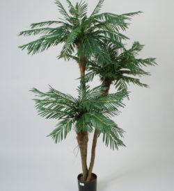 Trestammet Palme 190 cm