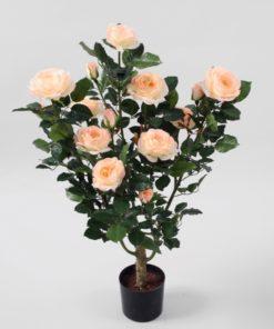 Rosebusk 86 cm