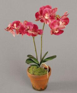 Orchide i krukke 45 cm