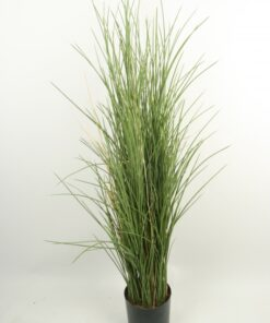 Gressplante