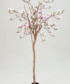 Magnolia tre 80 eller 180 cm