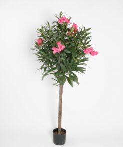 Oleander tre og plante
